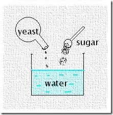 yeast and sugar the chemistry (biochemistry) a chemical reaction in which a ferment causes an organic molecule to split into simpler substances, esp the anaerobic conversion of sugar to ethyl alcohol by yeast.