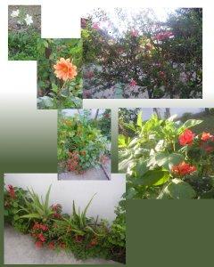 Flowers From Grandmas Garden