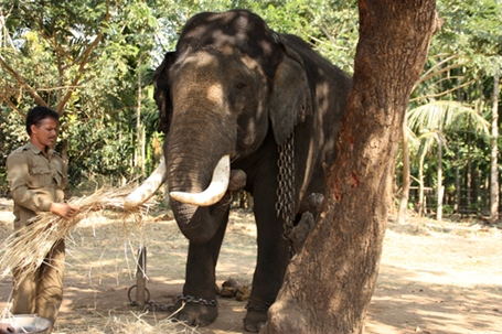 Elephant camp near Shimoga